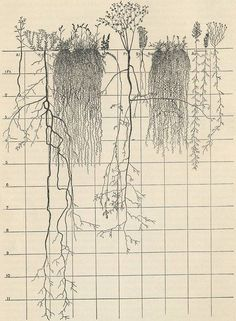 """""""Root bound,"""" my mother said, texting me a photo of her fig tree and its delicate, ever-entwining trunk. """"I've replanted it twice in its life, but it will need to be put in …"""