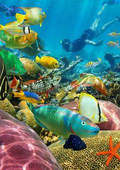 72 Fantastiche Immagini Su Fondali Marini Nel 2018 Marine Life