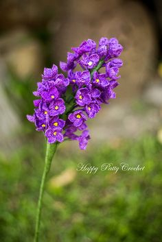 Ravelry: Lilac Flower pattern by Happy Patty Crochet
