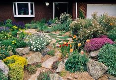 A beautiful Xeriscape garden by John Smithin Golde, Colorado, features poppies, apache plume, sedum, acantholimon and other drought tolerant plants