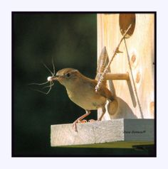 HOUSE WREN Nature Photography Bird Watching by TheRusticWoodshed, $12.50