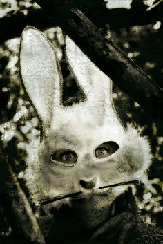 Hare I am Conceptional Photography Poetic Visions Photography Tina McNeill Creepy Clown, Scary, Bunny Mask, Bunny Bunny, Bunny Rabbits, Easter Bunny Pictures, Easter Bunny Costume, Alternative Art, Bizarre