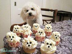 Cupcakes for Casper