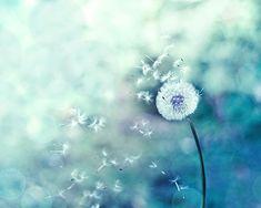fine art photography dandelion print dandelion wall art nursery decor art print photography decor botanical art print floral teal home blue