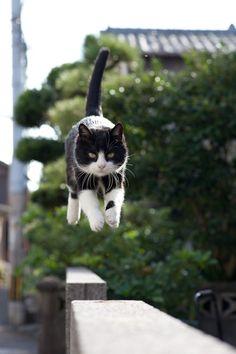 Cat Heaven Island In Japan