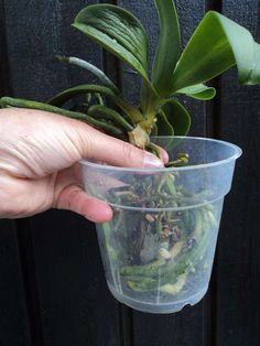 Re-boot your Orchids