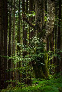 Wild Beerch | Flickr - Photo Sharing!