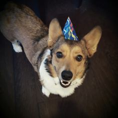 This is Scooter, and it is his cake day! #Imgur