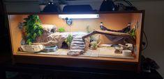 Bearded Dragon Tank Setup, Bearded Dragon Care Sheet, Bearded Dragon Vivarium, Bearded Dragon Enclosure, Bearded Dragon Terrarium, Bearded Dragon Habitat, Bearded Dragon Cage Ideas, Cute Bearded Dragon, Leopard Gecko Terrarium