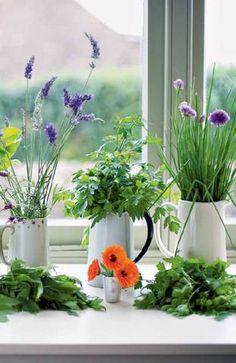 Herbs: River Cottage Handbook No. 10