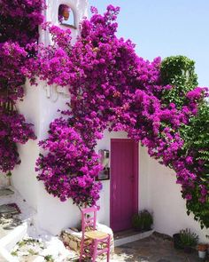 Beauty and the Harpsichord — Bougainvillea Beautiful Gardens, Beautiful Flowers, Beautiful Places, White Flowers, Colorful Garden, Backyard Landscaping, Landscaping Ideas, Patio Ideas, Doors