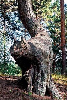 Tree shaped like a cat. How awesome is that? | eugeniocorrao.it