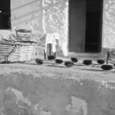 Urchins waiting to be eaten. Paros, Greece Photo by Zaharias Stellas Summer Of Love, Summer Time, Benaki Museum, Greece Pictures, Old Greek, Eat Pray Love, Famous Photographers, The Old Days, Greek Islands