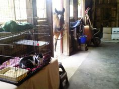 Shelter Me Inc has placed dozens of semi-feral cats in barns; invariably the horses are very interested in the cats.