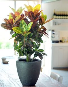 The houseplants in t