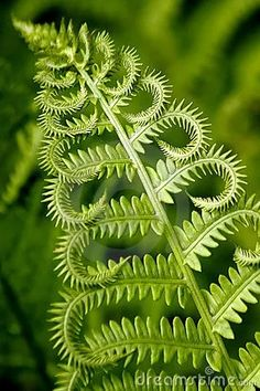 Photo about Close up of a fern leaf. Image of geometric, close, detail - 938472