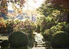 Suzanne Turley Landscapes - Paretai