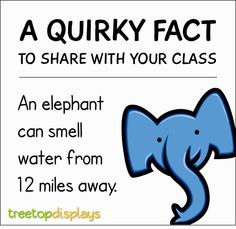 Treetop Resources : A quirky fact about elephants to share with your class from Treetop Displays. Visit our TpT store for printable resources by clicking on the provided links. Designed by teachers for Pre Kindergarten to Grade. Elephant Facts For Kids, Elephants For Kids, Animal Facts For Kids, Fun Facts For Kids, Fun Facts About Animals, Science For Kids, Fun Facts About Elephants, Wow Facts, Wtf Fun Facts
