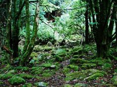 A Fairy Forest in Ireland