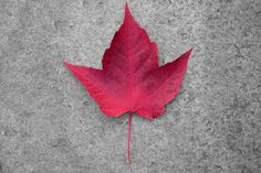 Leaf in the Fall in Whistler Village Whistler, British Columbia, Fall, Photography, Autumn, Photograph, Fotografie, Fotografia, Photoshoot