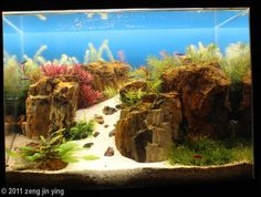 2011 AGA Aquascaping Contest - Entry #286