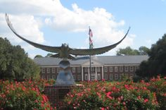 UNCW at Wilmington,NC!! This is Sammy the seahawk!! I'd like to shake his hand!