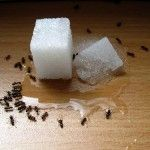 From peppermint to borax, we tested 13 natural remedies for killing ants or repelling them. Here are the best natural pest control methods to help you cope.