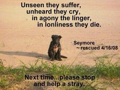please stop and help a stray