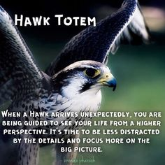 Hawk totem by Feather Meaning, Hawk Spirit Animal, Animal Spirit Guides, Your Spirit Animal, Animal Symbolism, Huron Indians, Animales, Animals