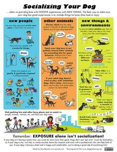 Socializing Your Dog Poster - Custom Posters - Design Your Own Wall. Socializing Your Dog Poster Socializing Dogs, Dachshund Funny, Education Canine, Easiest Dogs To Train, Dog Poster, Poster Design, Labradoodles, Dog Training Tips, Potty Training