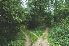 Woods, Forest, Pathway, Park, Trail