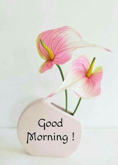Good Morning Tuesday, Good Morning My Love, Good Morning Friends, Sunday, Good Morning Images Flowers, Good Morning Images Hd, Good Morning Quotes, Gud Morning Wishes, Greetings For The Day