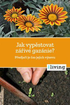 Pesto, Gardening, Lawn And Garden, Horticulture