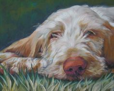 Spinone Italiano art CANVAS print of LA Shepard dog by TheDogLover