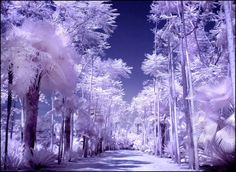 30 Brilliant Examples for InfraRed Photography