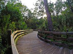 Whitemarsh island preserve trail. #gopro