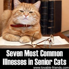 Seven Most Common Illnesses in Senior Cats-and tips for providing great care for your senior cats 7+