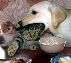dont' eat my mom !!!!!