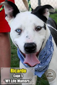 CODE RED URGENT!!!! CANTON, OHIO...$86 Cash to approved home Meet 05 Ricardo, a Petfinder adoptable Terrier Dog | Canton, OH | UPDATE: IF YOU WERE THE PERSON INTERESTED IN RICARDO/BOWIE, SATURDAY, YOU LEFT WITHOUT LEAVING...