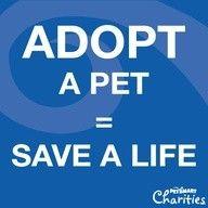 #adopt