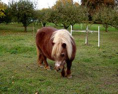 images of ponies | Original file  (1,601 × 1,273 pixels, file size: 733 KB, MIME type ...