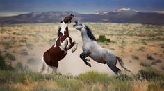 The wild horses' life! yourshot.nationalgeographic.com/daily-dozen/2016-09-21/.Every day, our editors select their 12 favorite photos recently uploaded to Your Shot.      See their choices, then check out submissions from the rest of the community.