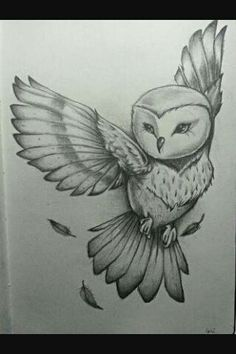 By Cari Espinosa. Owl drawing / sketch – You are in the right place about drawings beautiful Here we offer you the most beautiful pictures … Pencil Art Drawings, Art Drawings Sketches, Cute Drawings, Owl Drawings, Cute Owl Drawing, Drawing Animals, Good Sketches, Easy Drawings Of Animals, Tattoo Drawings