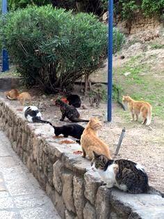 Jaffa, Israel Cat's