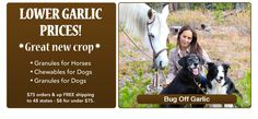 Springtime Inc. has supplements for horses, dogs and people. Great garlic products and decent prices. Bug Off, Natural Supplements, Order Up, Spring Time, Garlic, Horses, Dogs, Nature, People