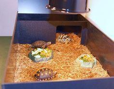 Complete Tortoise Habitat (Medium Starter Tortoise Kit) for sale from The Turtle Source Red Footed Tortoise, Tortoise Care, Tortoise Habitat, Turtle Habitat, Tortoise House, Tortoise Terrarium, Turtle Terrarium, Tortoise Enclosure Indoor, Turtles
