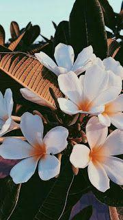 27 Best Mobile Images On Pinterest Background Images Backgrounds