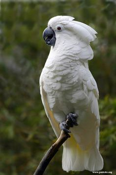 exciting adorable pet birds cockatoo special : It's hardly surprising that lots of prospective hen entrepreneurs want a chicken who is helpful, delicate, in addition to well-suited so that you can . Pretty Birds, Beautiful Birds, Animals Beautiful, Rare Birds, Exotic Birds, Tropical Birds, Colorful Birds, Animals And Pets, Cute Animals