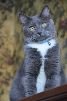 Pretty Grey and White Kitty ♥