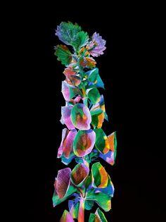 Torkil Gudnason, Electric Blossom 006